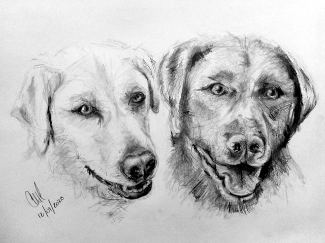 Pencil drawing of Labrador dogs as an example of image alt attributes.